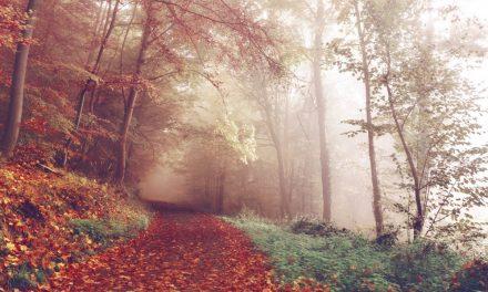Tips tegen een herfstdip