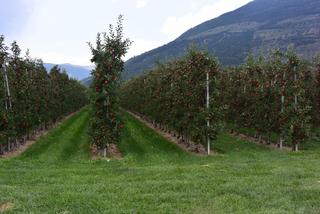 Zuid-Tirol - www.puursuzanne.nl