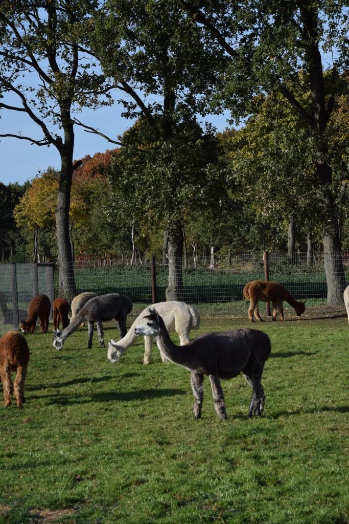 www.puursuzanne.nl - Maashorst