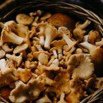Hoe kunnen paddenstoelen bijdragen aan je gezondheid?