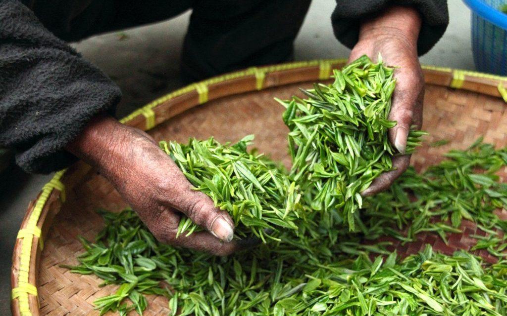 7 redenen waarom groene thee goed voor je is